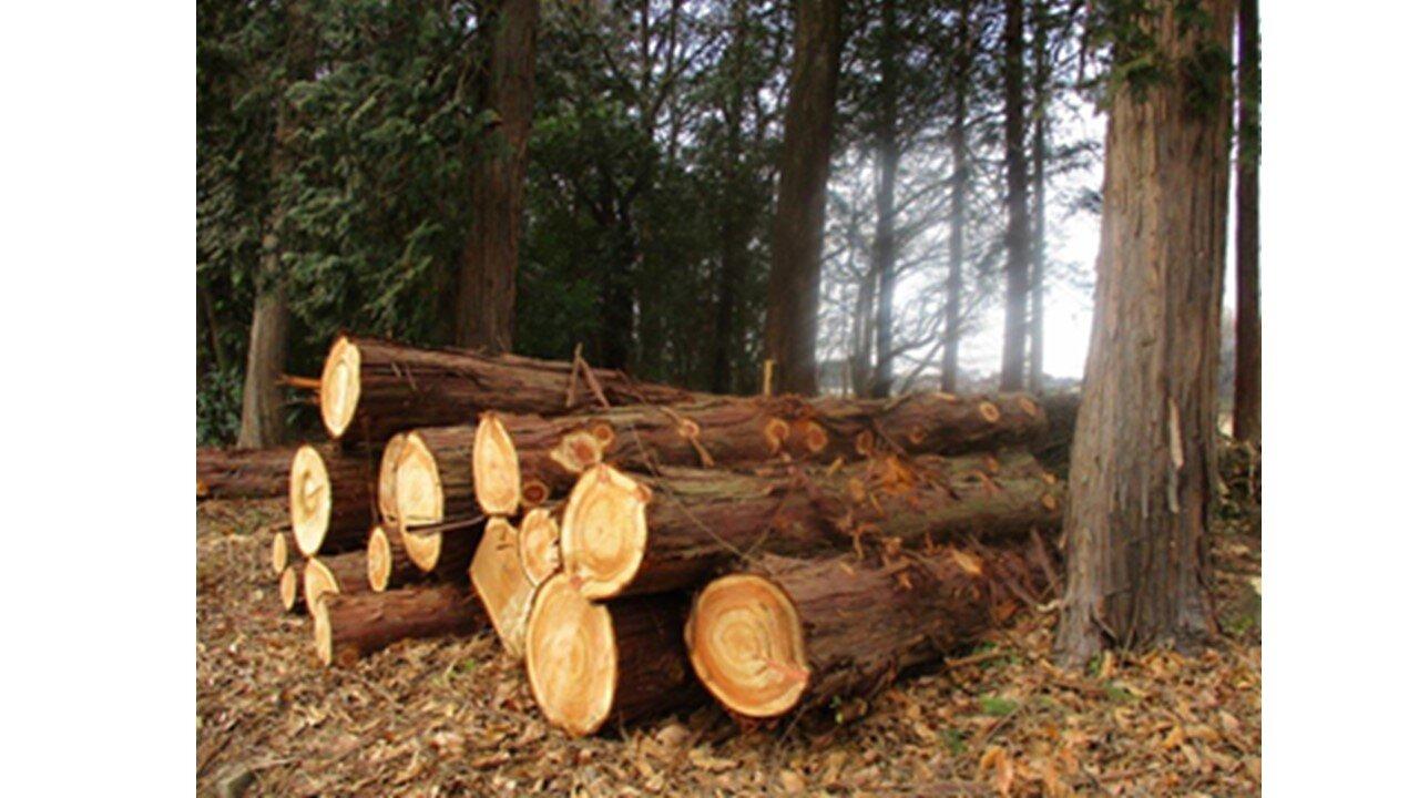 当社社有林での間伐の様子