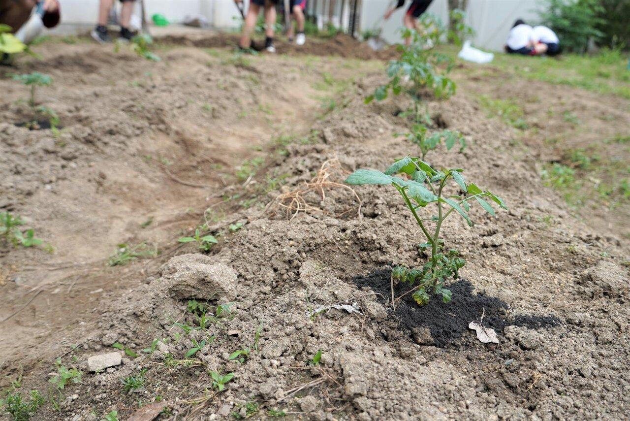 土壌改質材「瀬織」