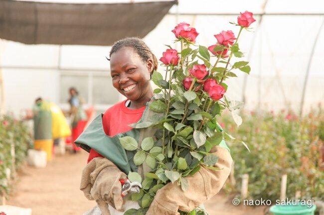 ケニアのバラの農園で働く女性
