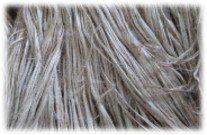 ケナフ繊維
