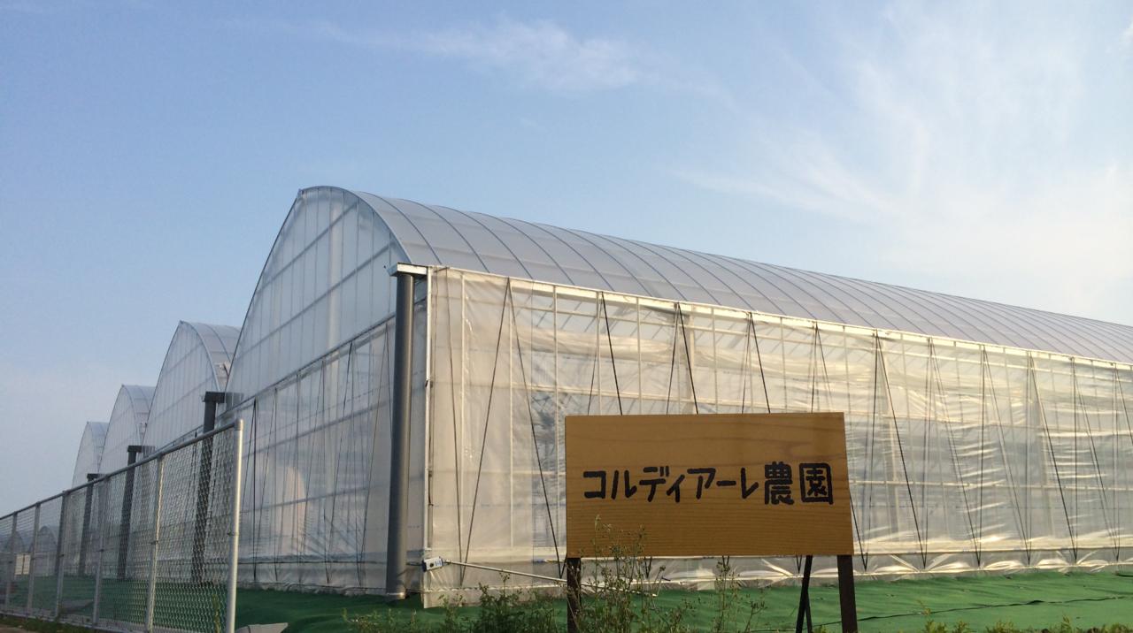 コルディアーレ五島高田第一農園