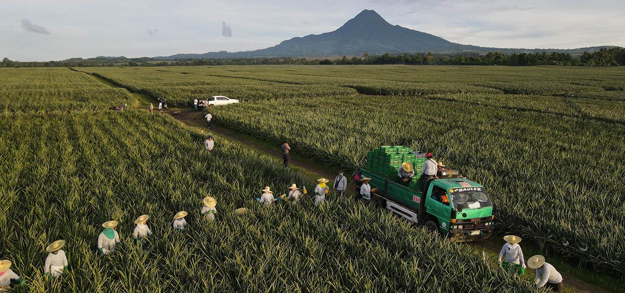 脱炭素社会に向けて 日本初 ブルーアンモニアの肥料用途への展開