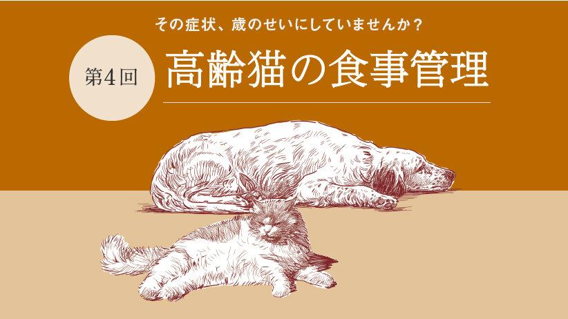 その症状、歳のせいにしていませんか?[第4回]高齢猫の食事管理