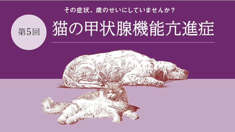 その症状、歳のせいにしていませんか?[第5回]猫の甲状腺機能亢進症