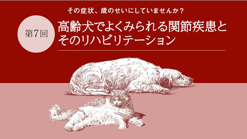 その症状、歳のせいにしていませんか?[第7回]高齢犬でよくみられる関節疾患とそのリハビリテーション