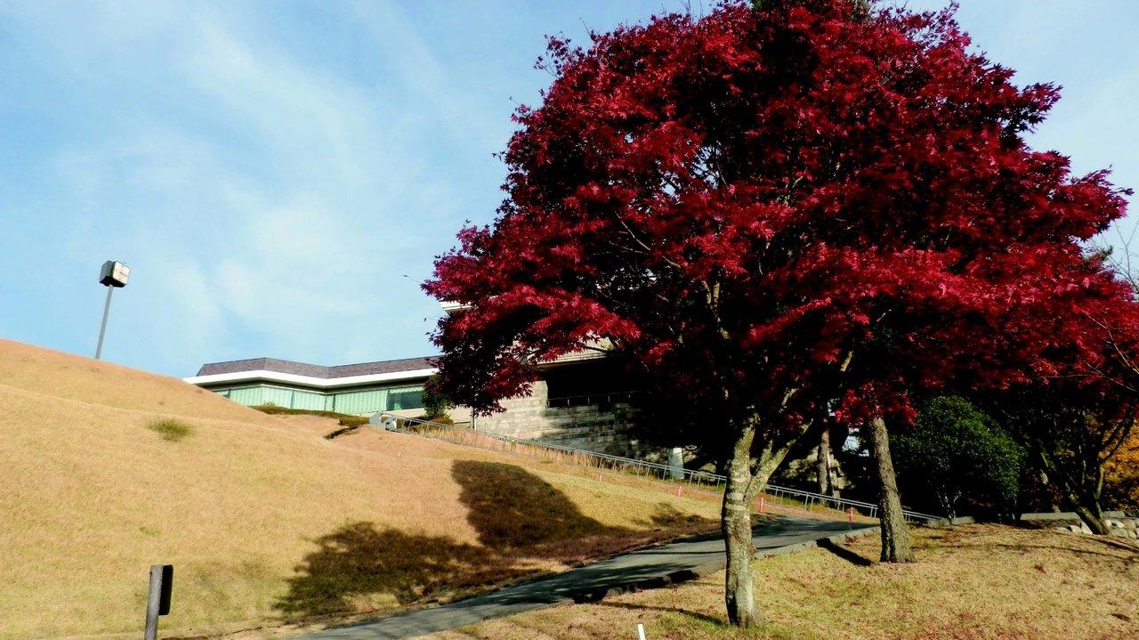 [ゴルフ]GPS完備で紅葉のきれいな関西のゴルフ場 大宝塚ゴルフクラブ