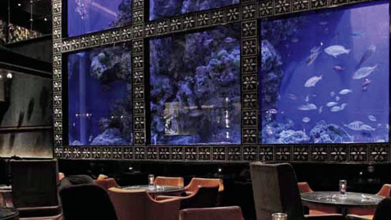 [レストラン]まるで水族館!?ラグジュアリーに東京の夜を満喫