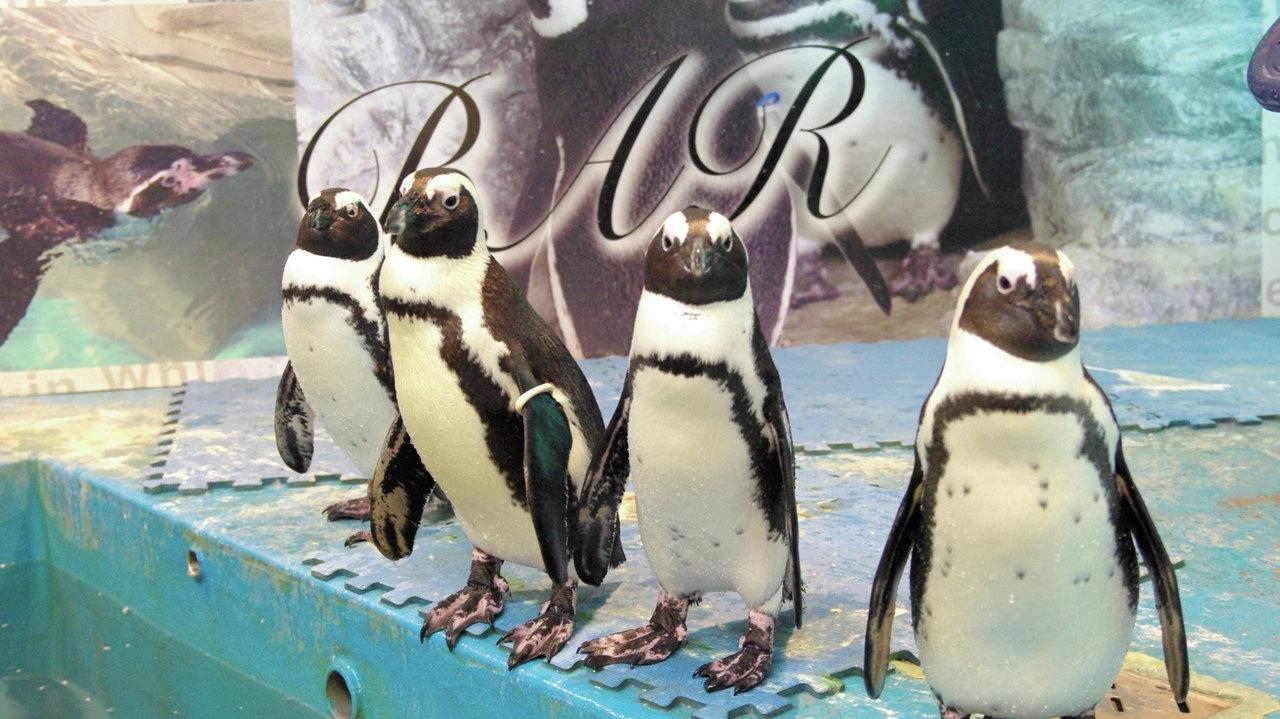 [レストラン]世界中探しても見つからない!? レストランでペンギンがお出迎え!