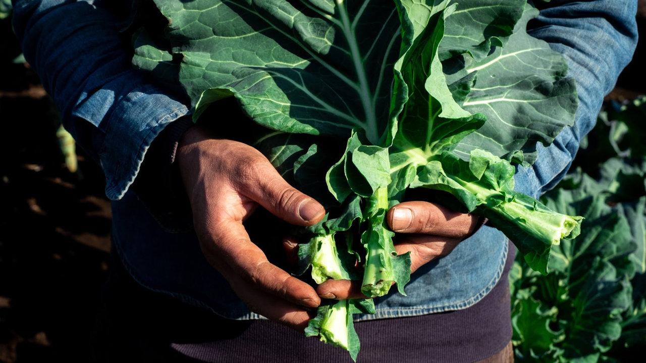 野菜の王様ケールのコールドプレスジュースが待望の予約販売スタート!