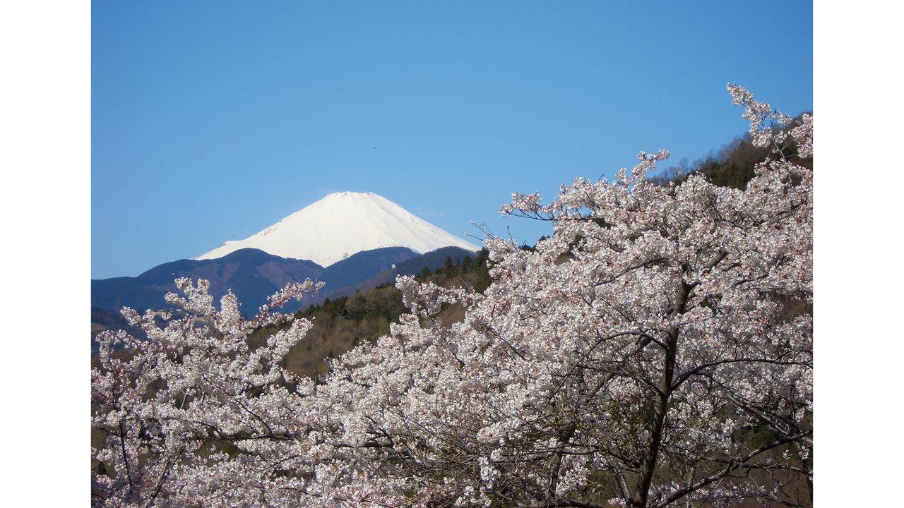 花見がしにくい世の中だからこそ、2021年は桜を満喫しながら明るくゴルフを楽しもう!