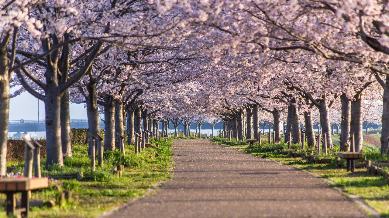 ユニクロのお花見散歩のアウター3選!これは今買っておきたい!