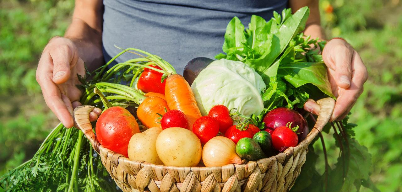 初めての家庭菜園にトライ!簡単キットで枝豆やアスパラガスもらくらく収穫できる