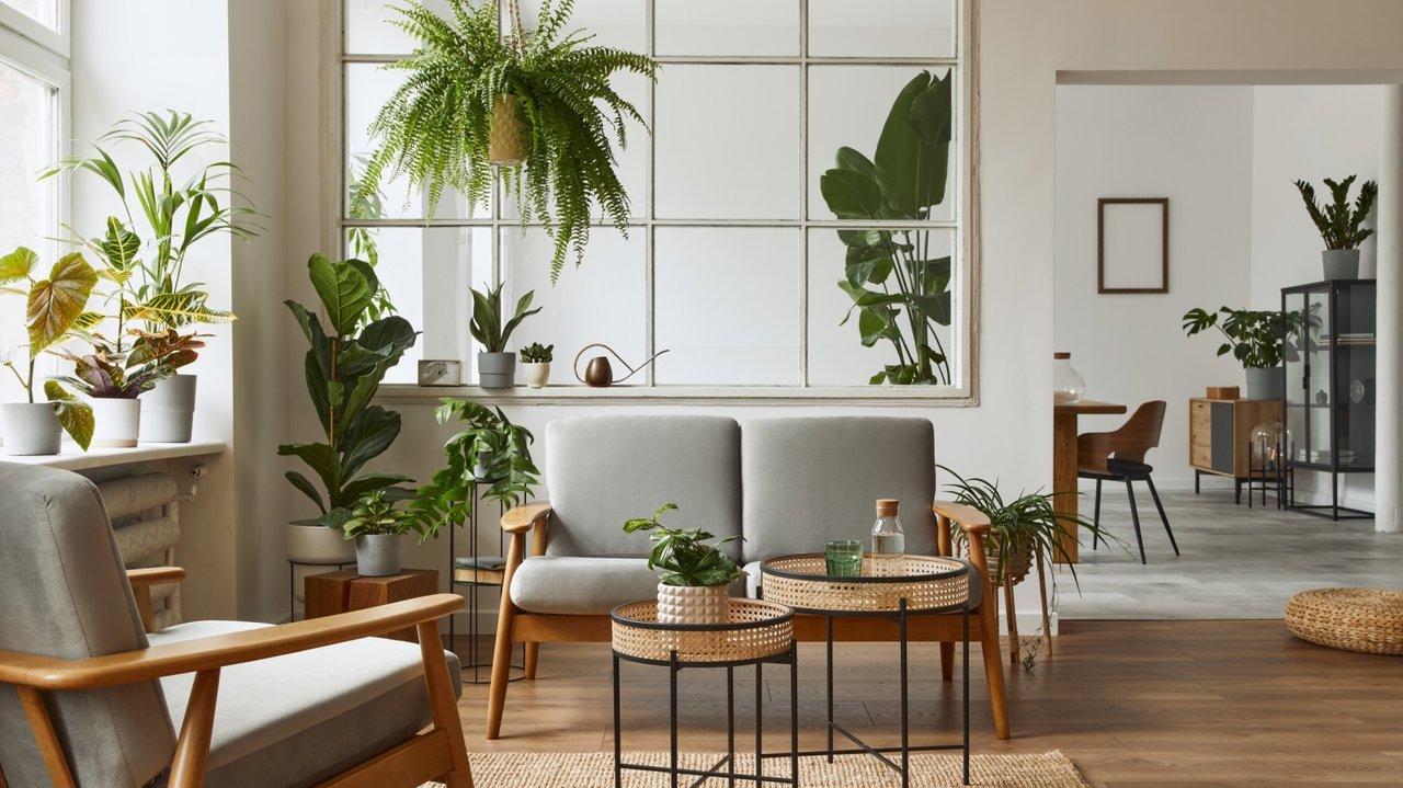 ハーブ系観葉植物でイヤ~な虫対策!お家に置いて癒されたい、安心・おすすめ3種