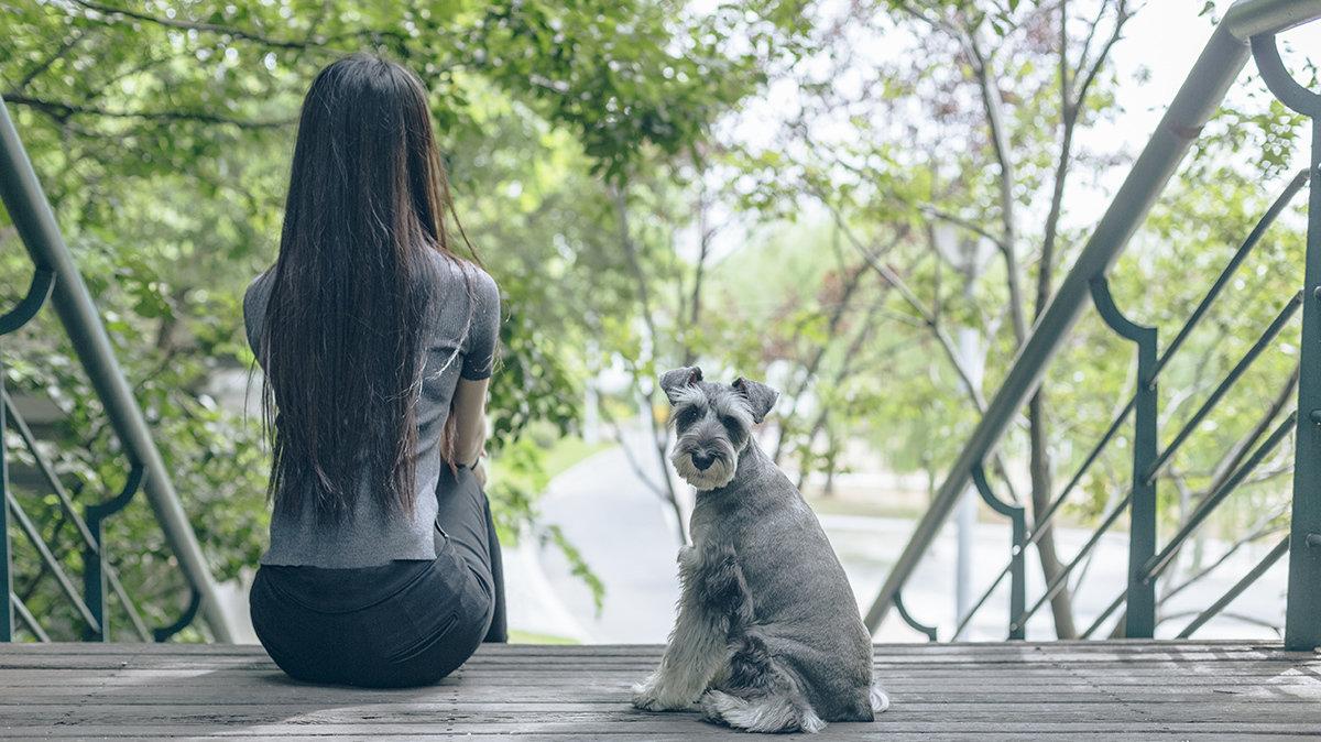 愛犬と過ごす特別な夏!東京マリオットホテル「ドッグフレンドリールーム」とは?