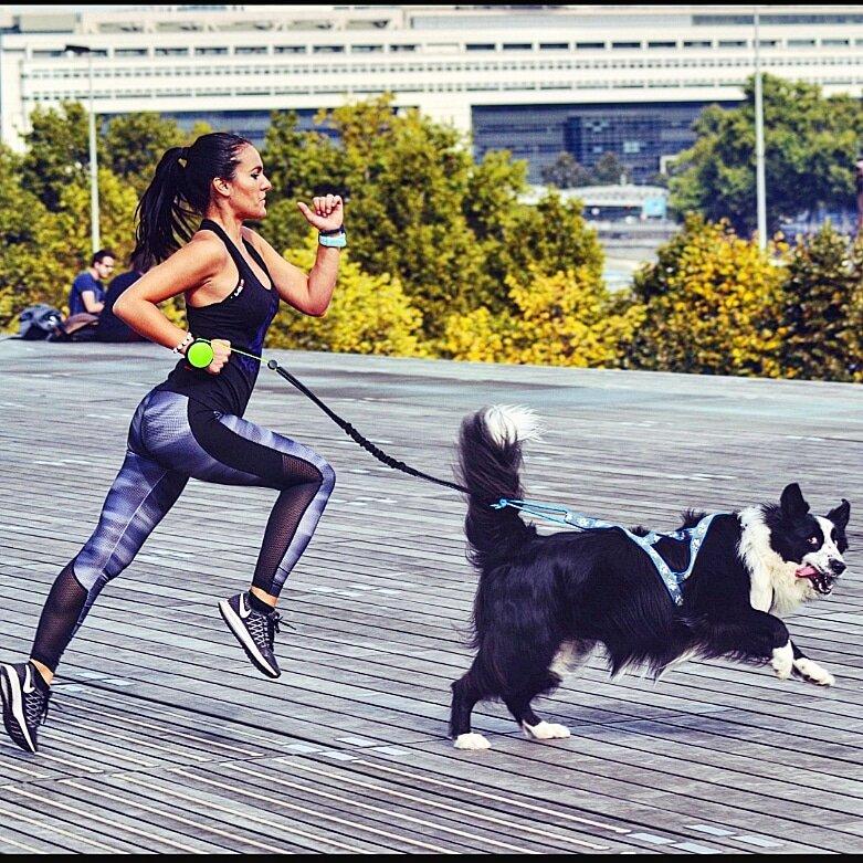 愛犬との散歩をもっと快適に!ハンズフリーを実現するリード「リシニュー3」
