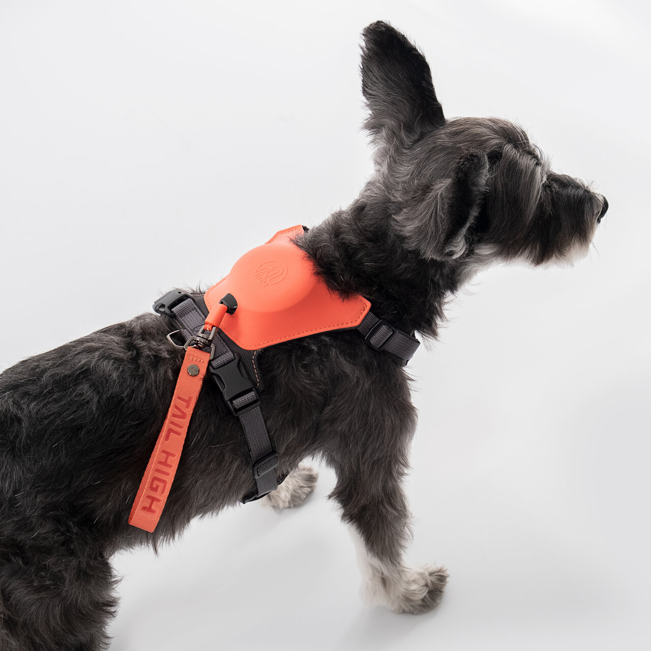 愛犬とのおでかけを快適に!世界初の機能を搭載したリード一体型のハーネス