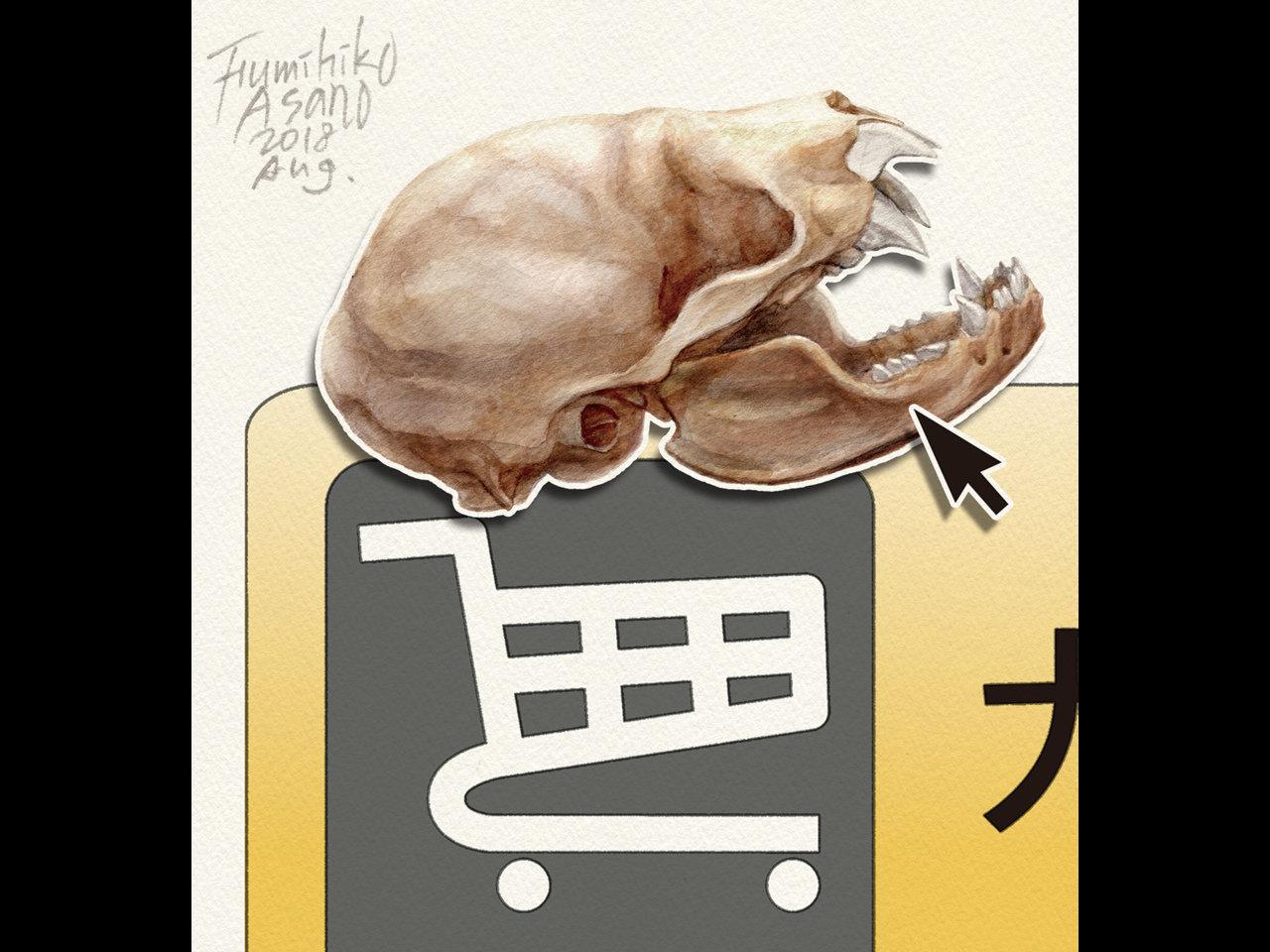 標本を買う