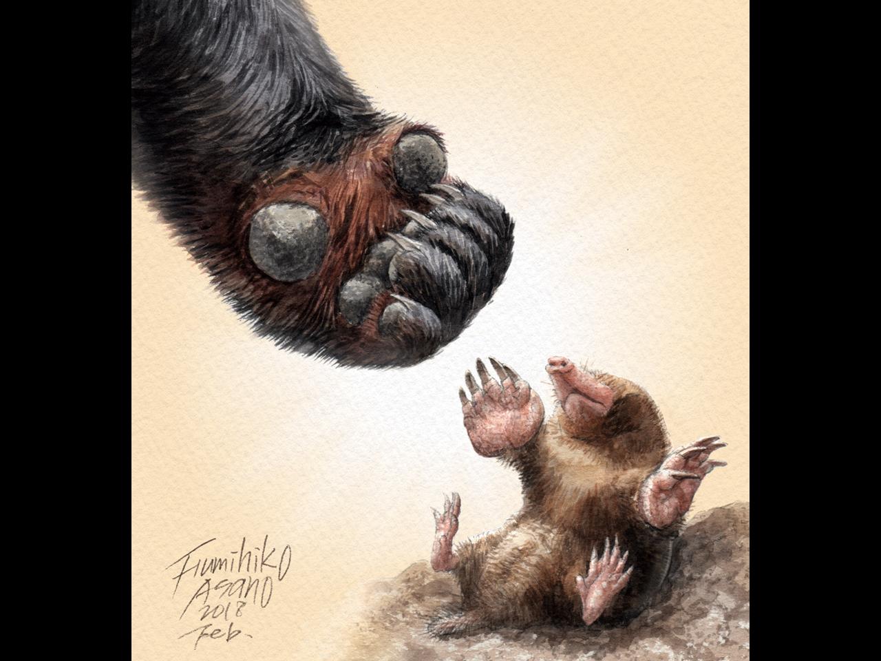 モグラの親趾