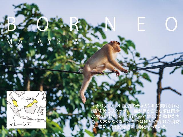 マレーシア・ボルネオ島のジャングルで、持続可能な歩み方を考える。