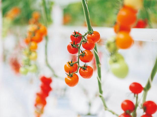 三重県から世界へ。現場を科学し農業の未来をつくる、『あさい農園』。