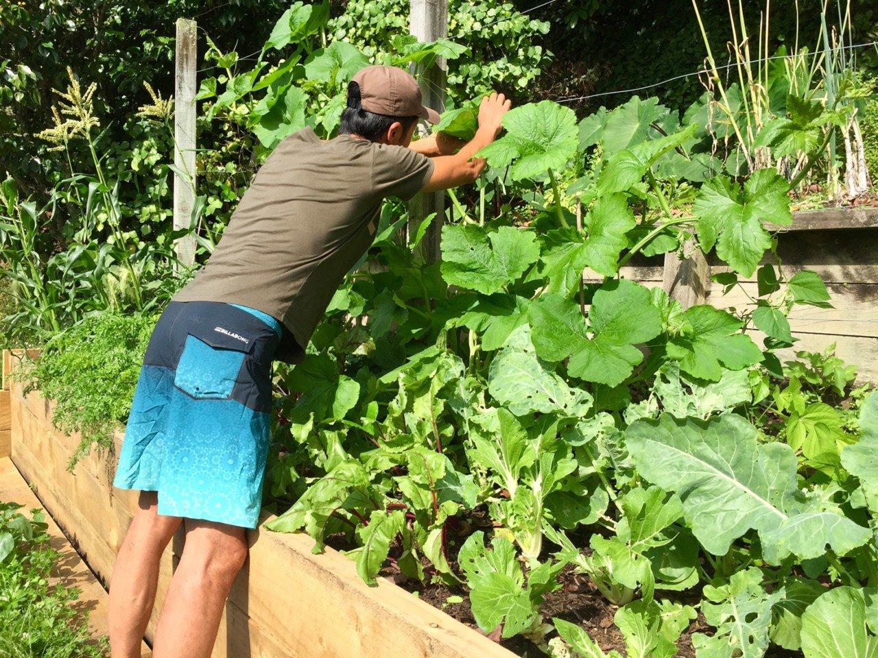 「菜園の大リノベーション