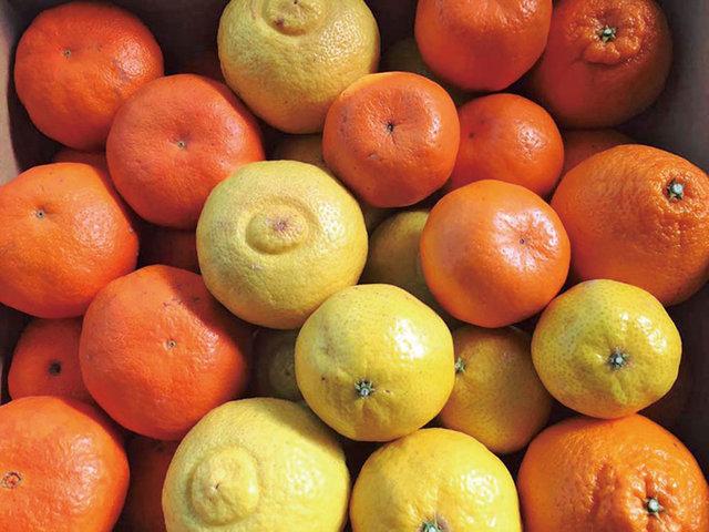 柑橘ソムリエライセンス制度や羽釜で感じる田の力など。ローカルプロジェクト・カタログ in 愛媛県