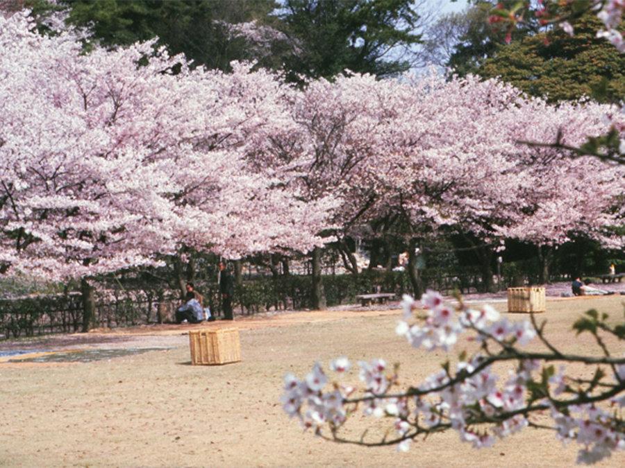 世界が選ぶ2020年に訪れたい旅行先「香川県高松市」春先から初夏まで陸・海・空