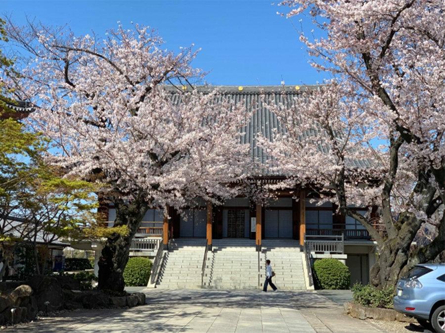 「桜プロジェクト」開始。全国の桜をライブ中継で介護施設に届けよう