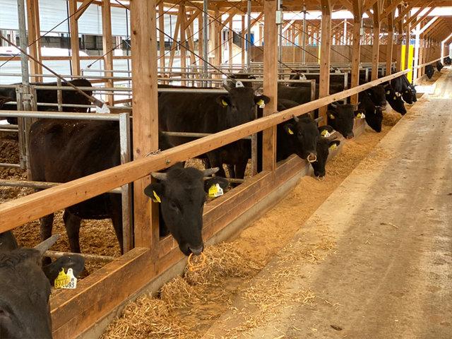 ベンチャー企業×創業45年老舗企業の地域連携。近江牛畜産プロジェクトはじまります。