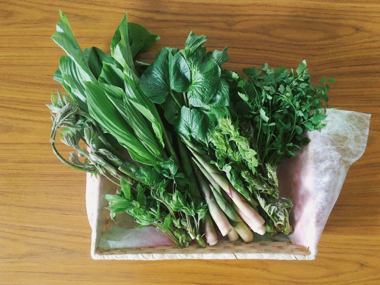 トガプロジェクトが「春のとがとくらす山菜セット」の販売をスタートしました。
