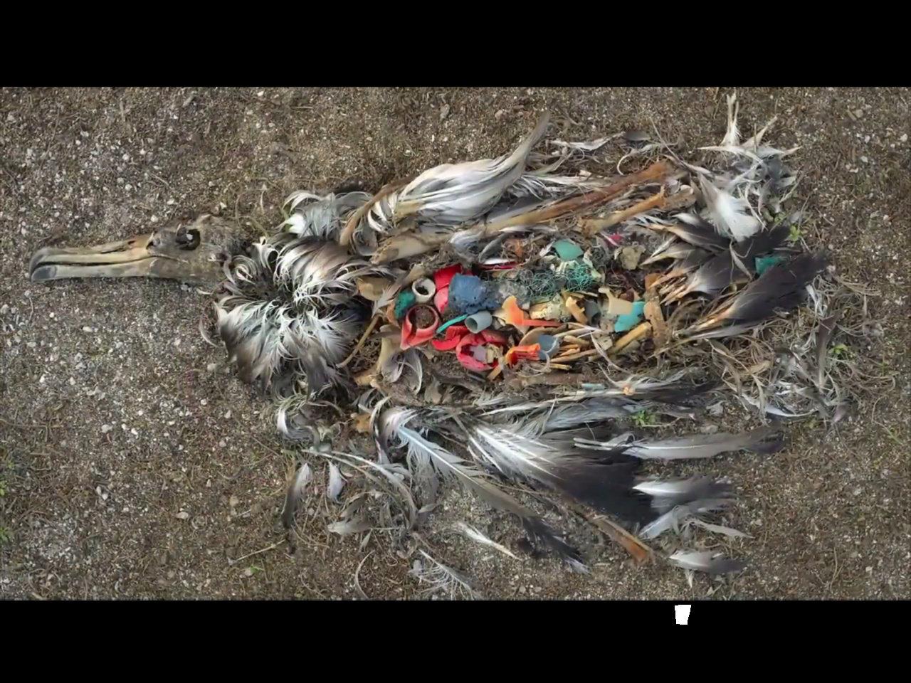 映画『プラスチックの海』予告編解禁。