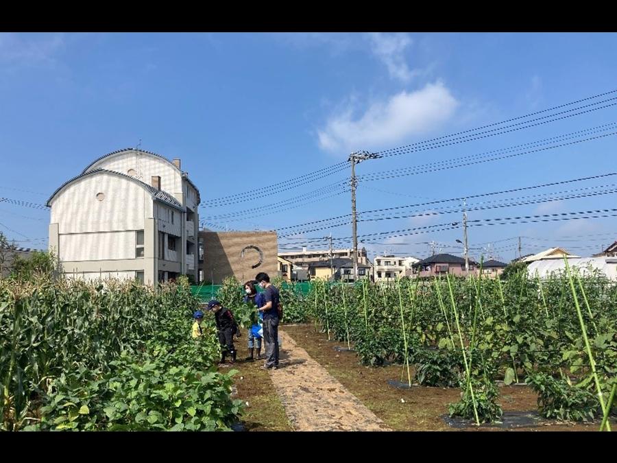 JA世田谷目黒と連携し、体験農園・収穫体験イベントを。「三井のすまいLOOP」でサービス提供開始