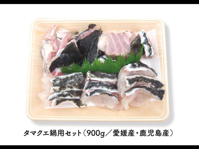 高級魚クエの新魚種「タマクエ」鍋用セットがコストコの西日本12店舗で発売開始です。