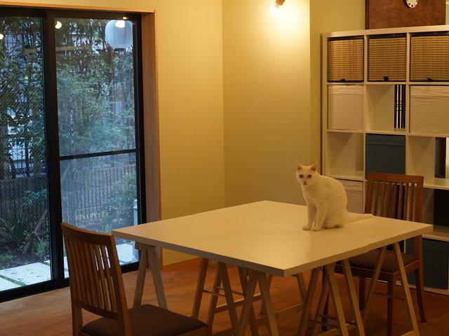 2/22は猫の日。保護猫が暮らすワーキングスペースで、テレワークの邪魔をされたい