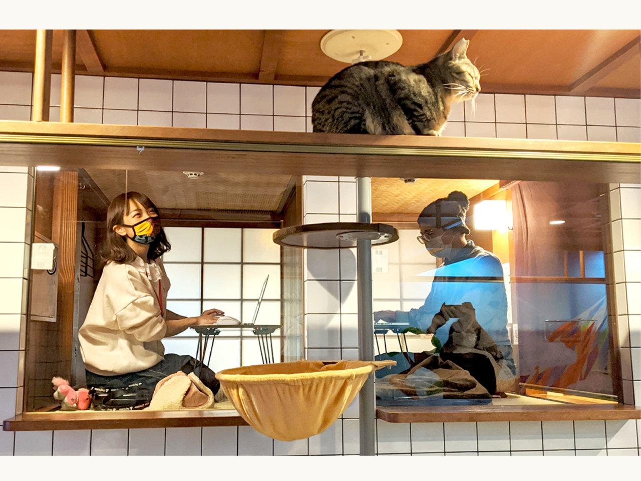 保護猫をまったり愛でながらテレワークできる、猫と泊まれるホテルの新サービス「猫旅籠ワーク」