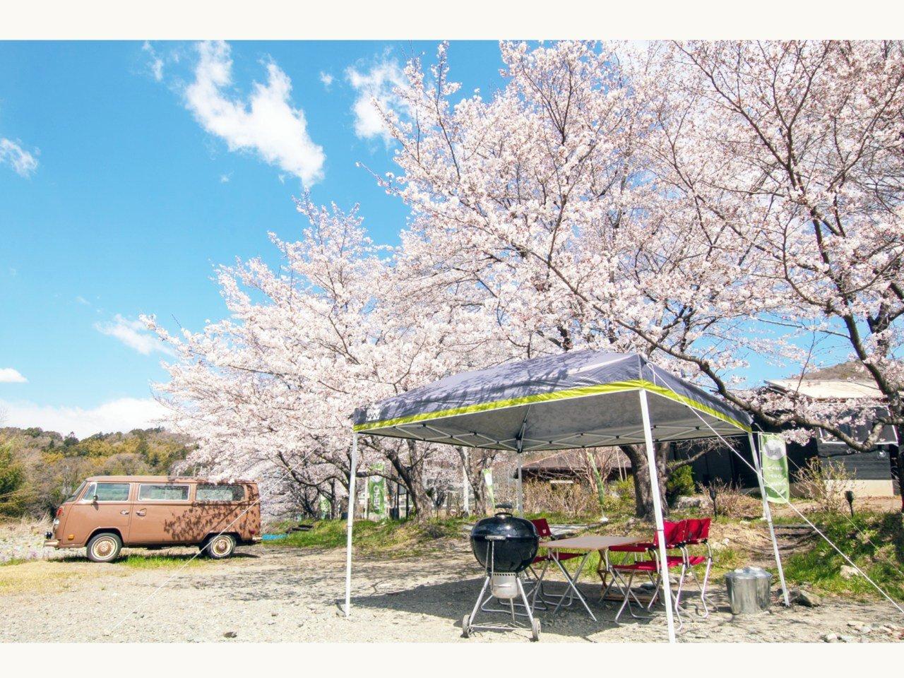 安心安全なお花見を。桜の木を一本貸し切るプライベートお花見エリア予約開始。