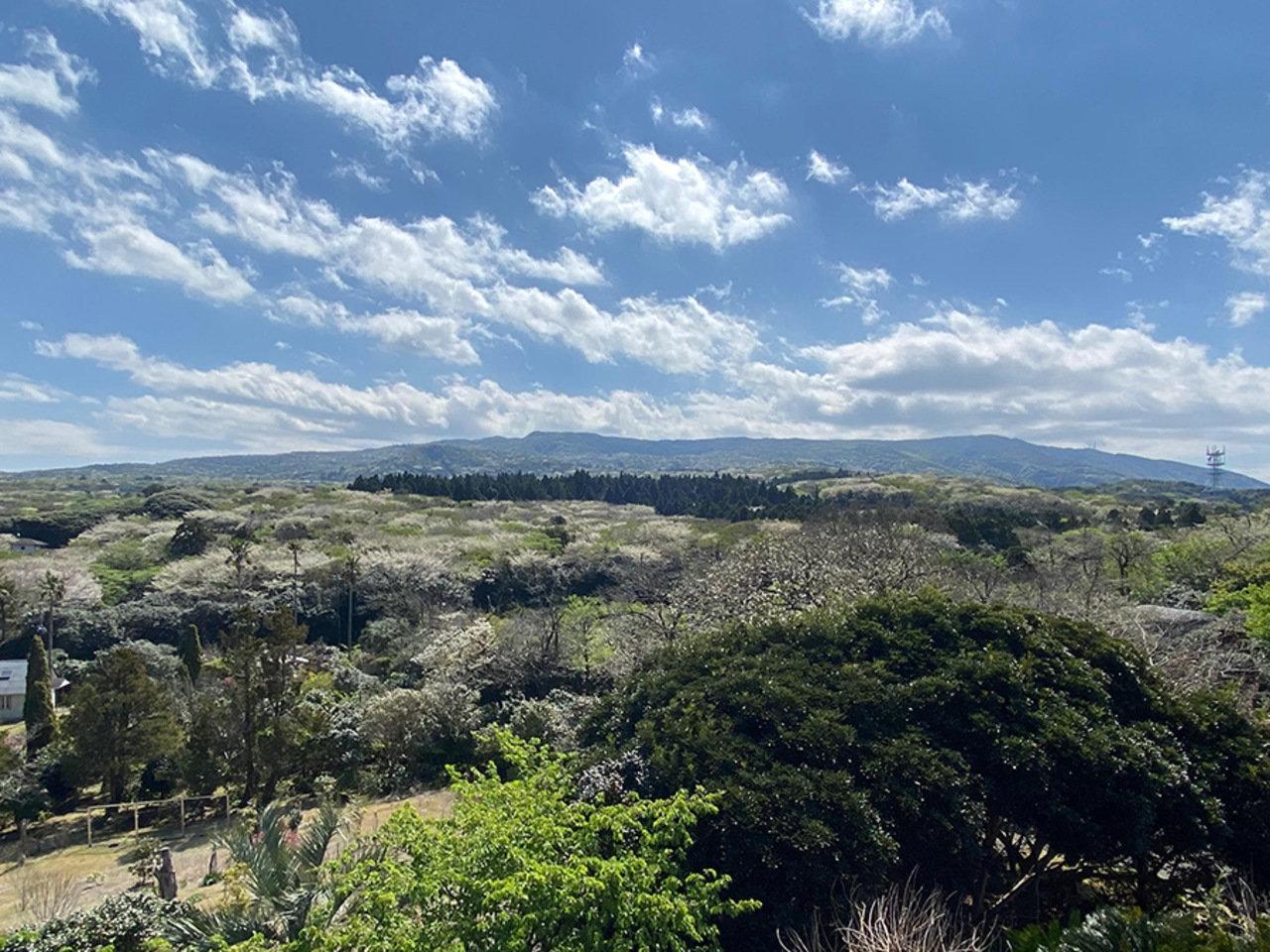 視聴のみ・焼酎&おつまみ付き・島のおかしのお土産付きの3プラン。「伊豆大島ウエルネスツアー」。