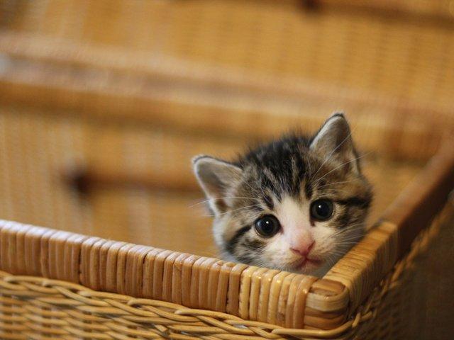 愛猫家が選ぶ、猫の防災用品ランキング。もしもの備え、何が必要?