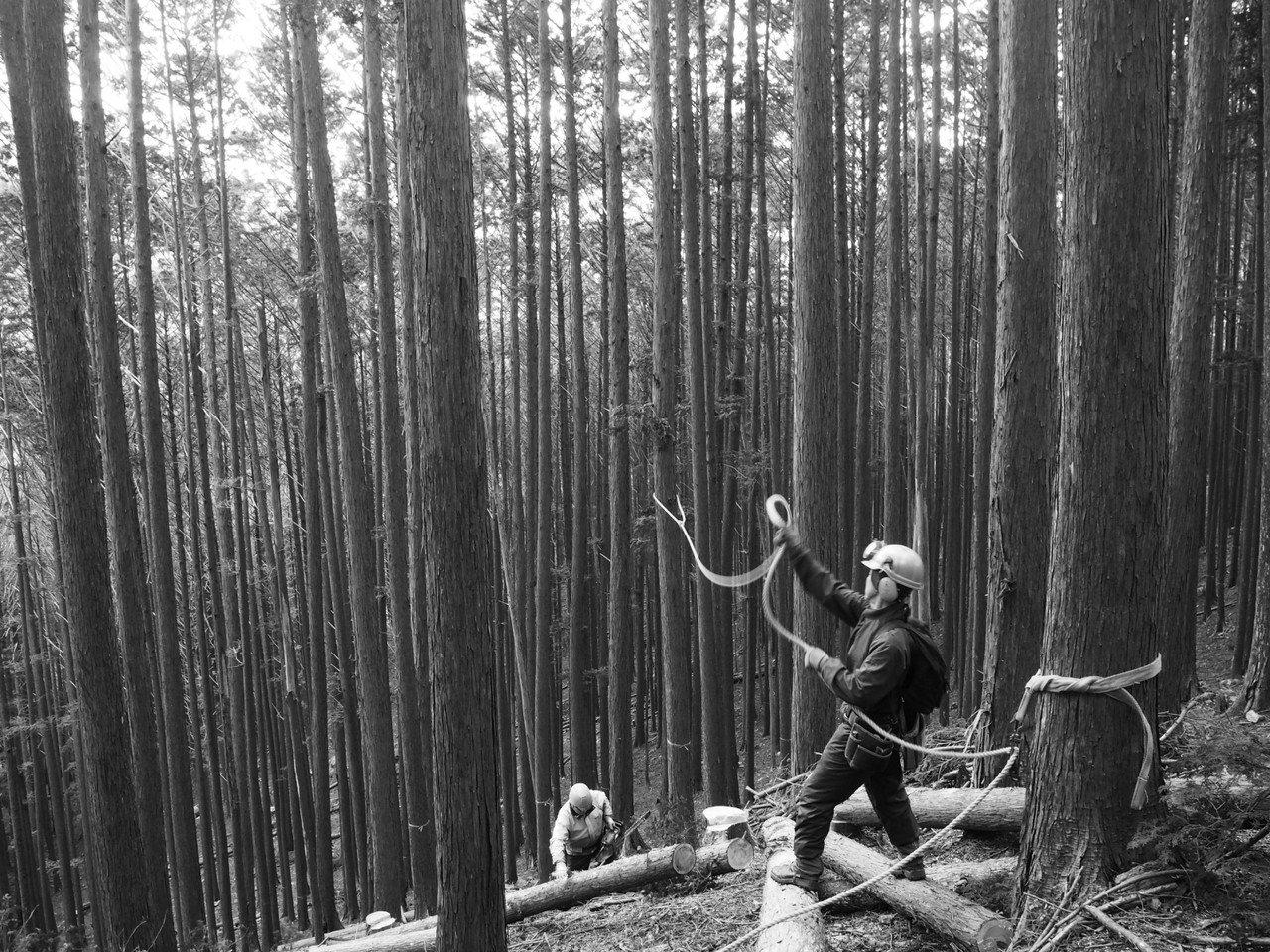 隣の山で、伐採の一日