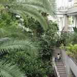 ゴーヤだけじゃない!? 緑のカーテンの育て方、植物園へ習いに行こう