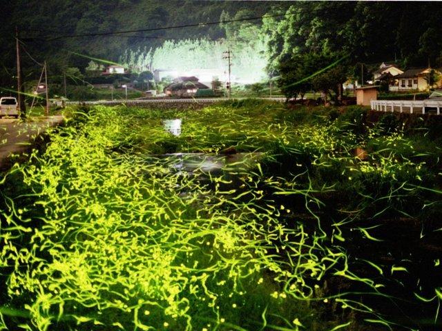 """「福地」って""""ふくち""""じゃないの⁈ 岡山県高梁市にある蛍のまち。地名に込められた願いとは"""