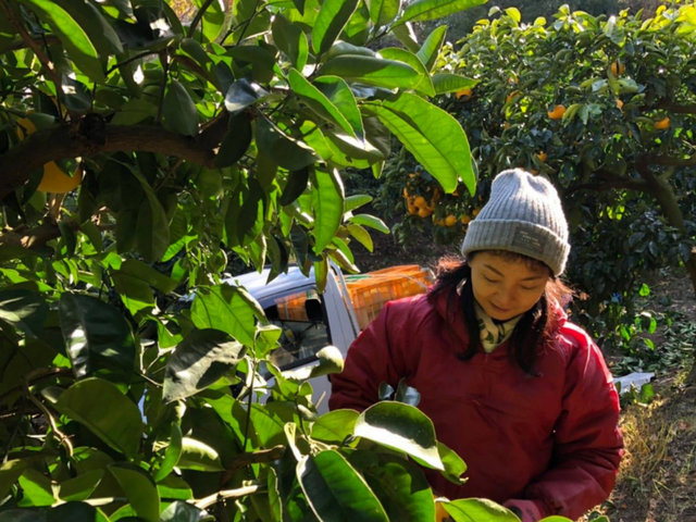 世界的ジュエリーブランドから、広島のレモン農家へ。感性と行動で道を開く。
