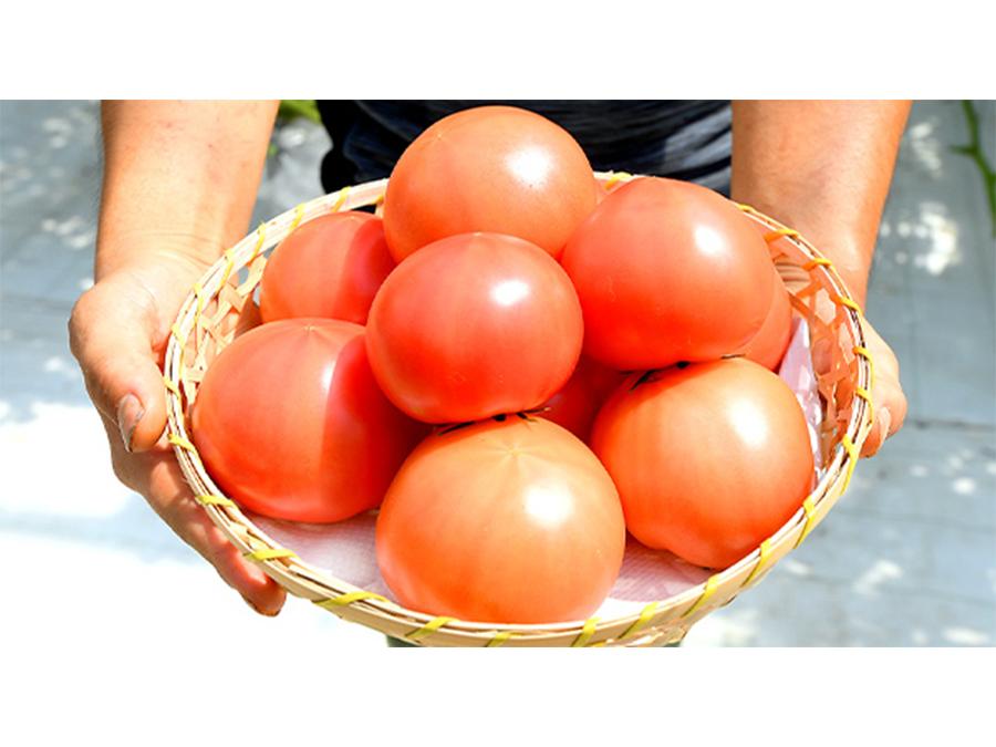トマトの魅力をもっと知ってほしい!