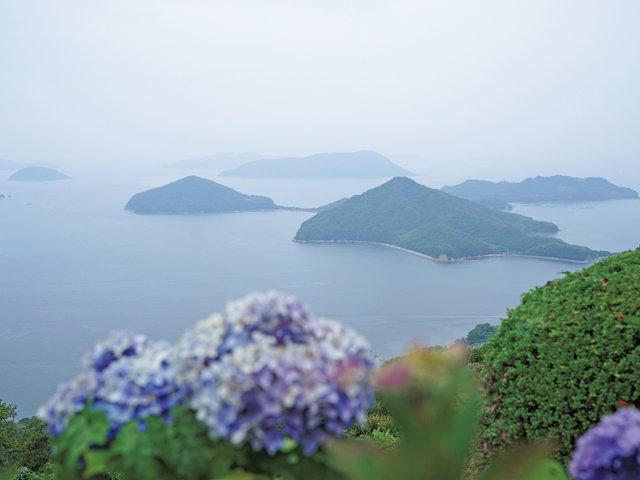 香川県三豊市 シーボルトが伝えた紫陽花と瀬戸内の多島美。