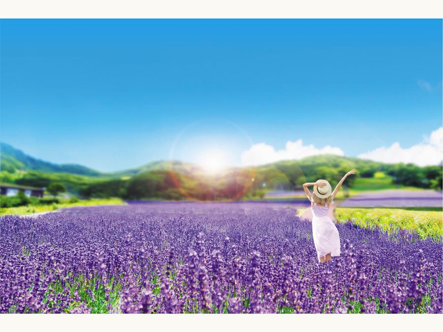 5万株のラベンダーが咲き誇るたんばらラベンダーパーク営業開始