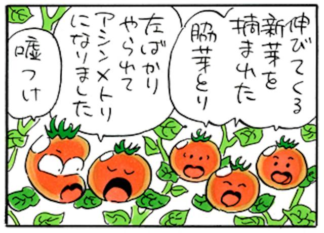 おいしいトマトが届くまでを/4コマ漫画「下川はるかエイト」36話〜39話