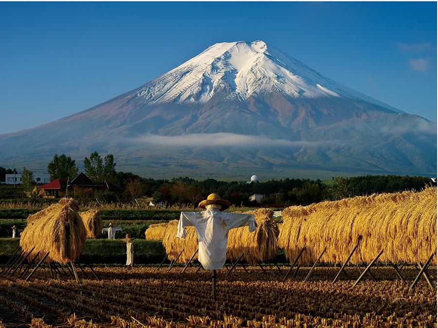 農作物の生産者の思いを届け、一次産業の理解と振興を図る