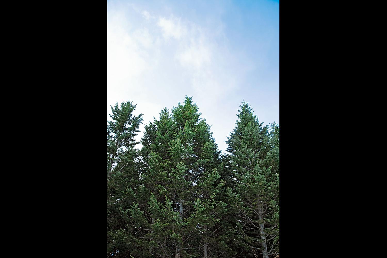 川町のFSC認証の森。森林資源を適正に、余すところなく使うことで、循環型の森林経営が実現する。