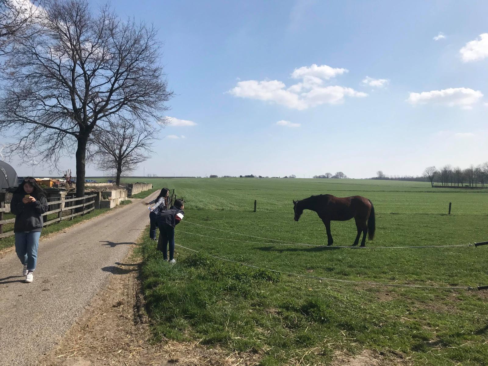 オランダのオーガニック農園