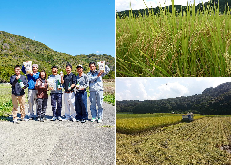 左/左から、田辺市内で酒類卸会社『堀忠商店』を営む堀将和さん、「熊野米」契約農家の大内大作・美砂さんご夫妻と、田上さん、そして石田辰夫・晃大さんご兄弟、『たがみ』の米づくり担当・越打文博さん。 右上/「熊野米」はこれまで廃棄していた梅の調味残液を使用して、除草剤の使用を減らしている。 右下/秋の収穫の様子。改良を重ねながらチーム一体となって「熊野米」を届けている。